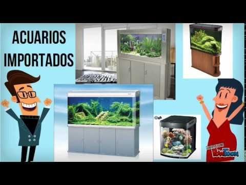Acuarios importados en quito ecuador peces ornamentales for Acuarios ornamentales