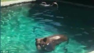 Bears invade California home after squeezing through tiny gap | CCTV NEWS!