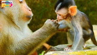 Don't worry Bellina if your mom stop nurse You have me need you|So Poor Bellina baby|Monkey Daily394