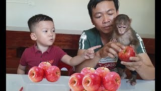 Baby Monkey | Doo Eats Red Delicious Apples With Family
