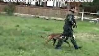 K9 Training for Swat Teams and Special Forces
