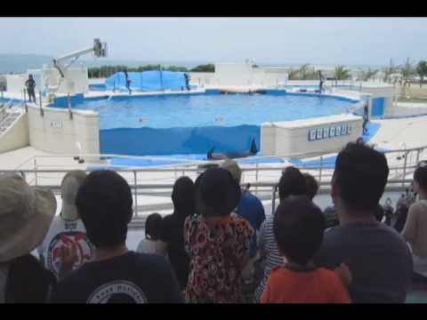 dolphin-jumps-out-of-tank.html