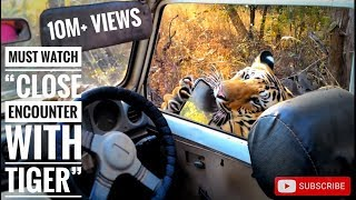 """Must watch """"close encounter with tiger T6 cubs"""", karhandla 1-1-16"""