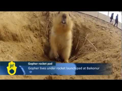 Gopher Living Under Kazakhstan Rocket Launchpad: Baikonur Cosmodrome, Russian Soyuz Launch Site