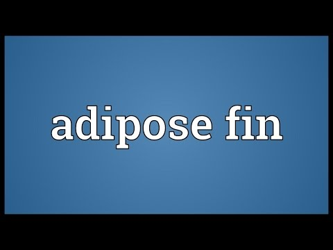 Header of adipose fin