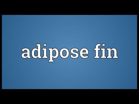 Header of adipose fin
