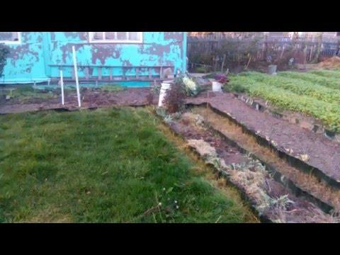 Подготовка моего огорода к зиме  Природное земледелие  Natural agriculture
