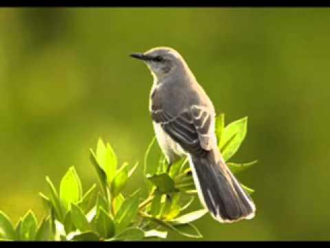 Suwanda Mal Renu Psr 530 video