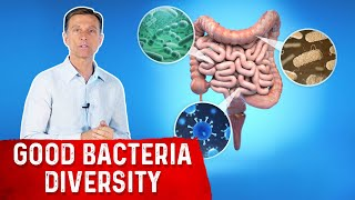 Increase Gut Bacteria Diversity: Here's How