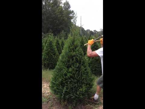 二刀流で木を斬る!?秒速のサムライ庭師