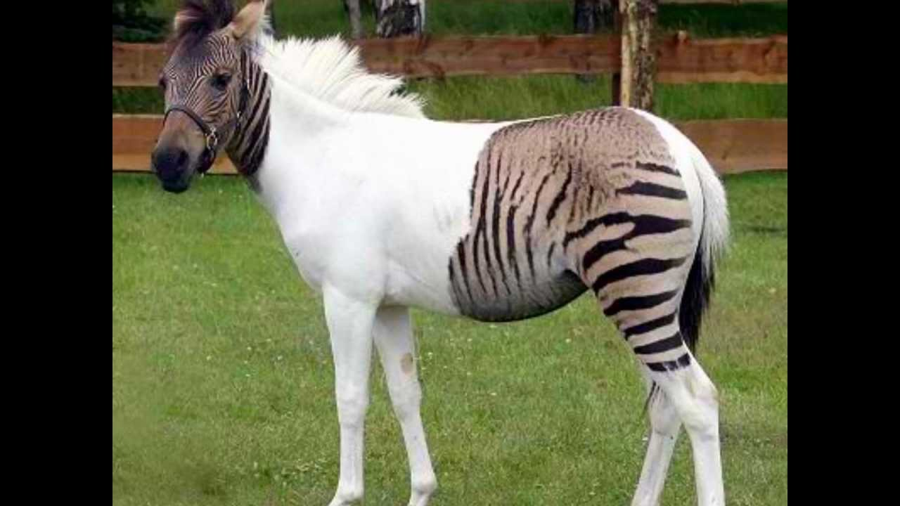 Top 5 most rare animals in the world