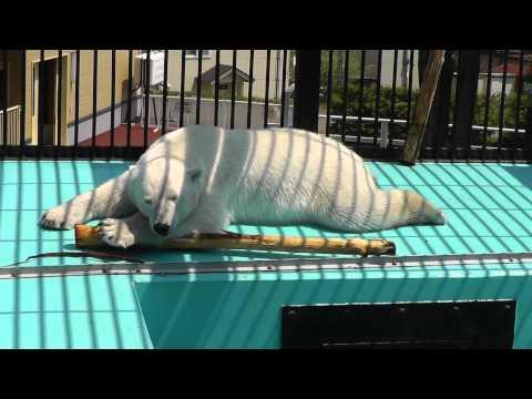 2011年5月26日 おびひろ動物園 なかなか寝付けないイコロ