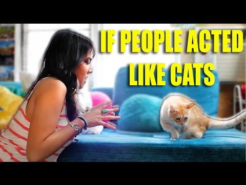 IF PEOPLE ACTED LIKE CATS