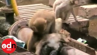 Monkey saves his electrocuted friend from railway station
