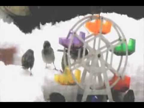 how to make a ferris wheel bird feeder