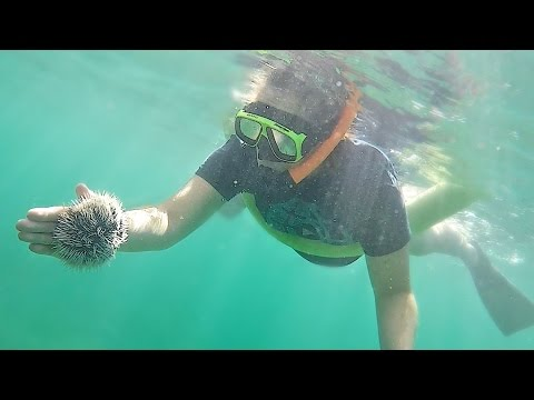 PLAYING WITH CARIBBEAN WILDLIFE!