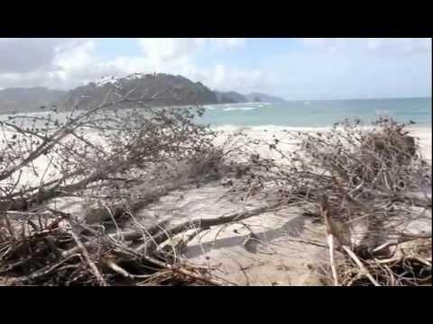 CLIMATE CHANGE SIGNS/ SEVERE COROMANDEL NZ
