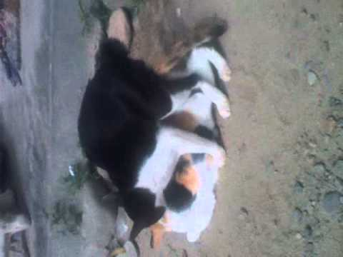 Kucing Sex.3gp video