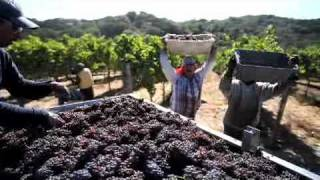 Career Exploration: Gallo Winery's Commitment to Training & Development