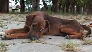 Veja o que aconteceu com este cão na rua