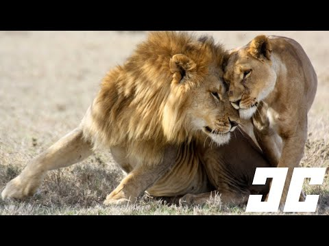 10 Bizarre Animal Mating Rituals video