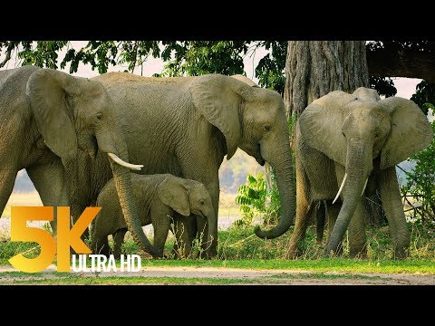 5K Wildlife Documentary Priview - Mana Pools National Park, Zimbabwe - Short Preview