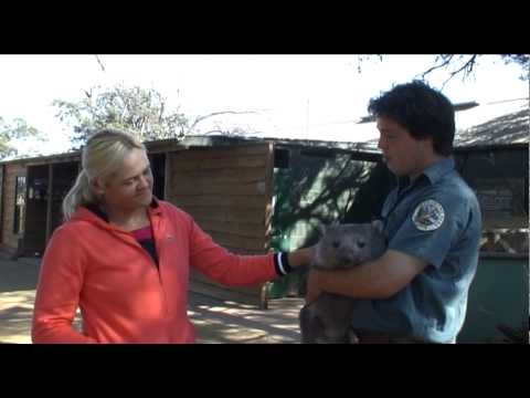 Aleksandra Wozniak visits Bonorong Wildlife Park Video