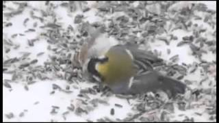 unbelievable birds fighting
