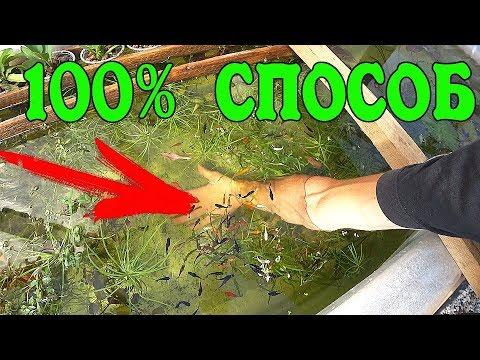 Уход за прудом – если он «позеленел». Комплекс мер