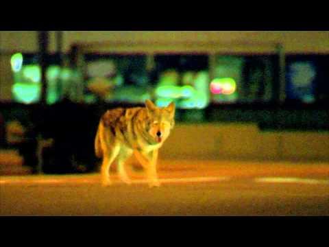 Collateral (2004) Coyote Scene 1080p
