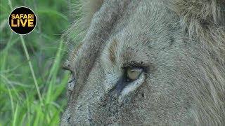 safariLIVE - Sunset Safari - January 16, 2019