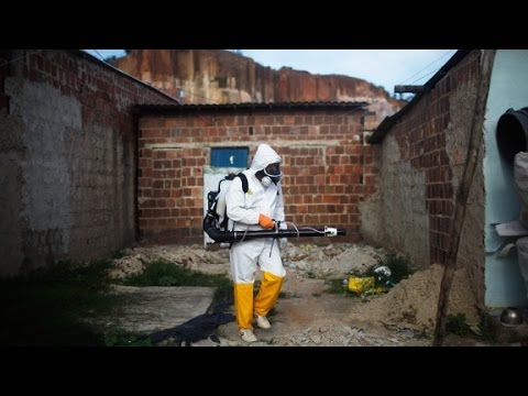 3 deaths linked to Zika virus