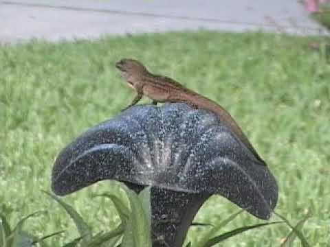 Drunk Squirrels Dancing Obstacle Course attacks deer toddler...