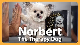 The Best Things Come In Small Packages! This 3lb Therapy Dog Proves It