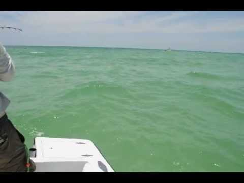 Tarpon Big Pass Sarasota