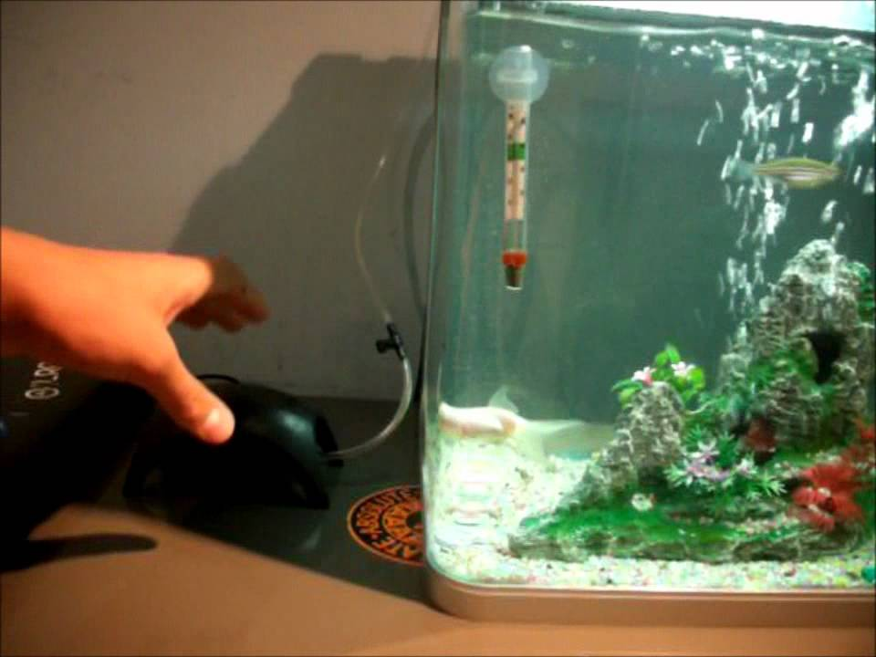 cool goldfish tank - YouTube