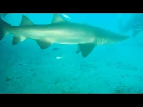 Tiger Sharks on our Olympus Dive Trip 7/26 & 7/27/14 part 3