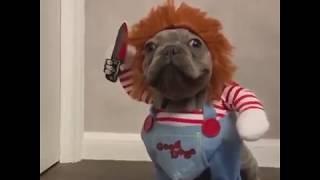 Romeo, el bulldog francés disfrazado de 'Chucky' que es viral en las redes