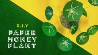 Qanvast DIY: Money Plant Video