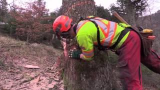Ab Cherli Forstunternehmen Ag Holzen F R Seilkran Ghv  Koller Bergab Bringung  Part Ii