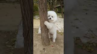 Look at these cute and funny puppies dogs 3245