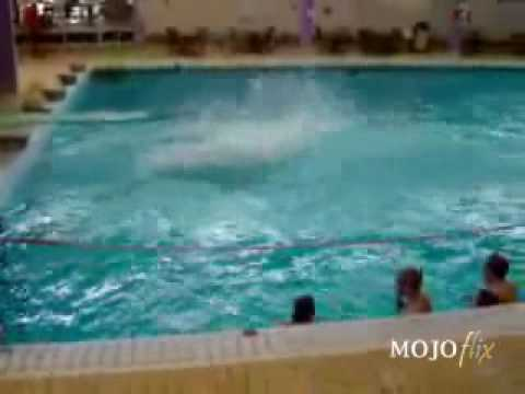 MojoFlix Diving Skills