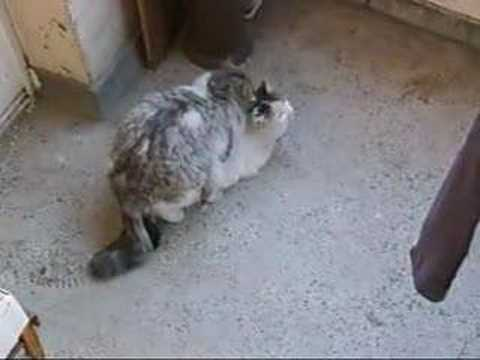Cats fucking videos
