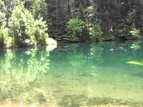 Spectacular trout pond youtube for Hardiest pond fish