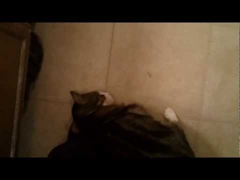 Bootsie The Cats Foot Fetish. video