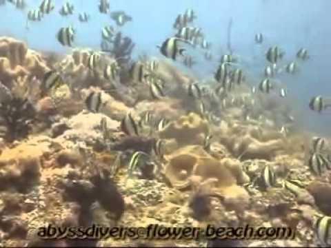 Activities around Bohol Island & Guest Activities