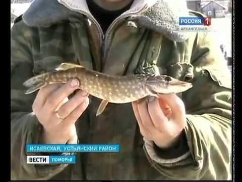 вести поморья рыбная ловля  сверху пушкинском озере