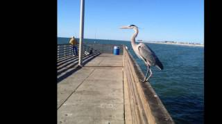 Watch John Denver Sticky Summer Weather video