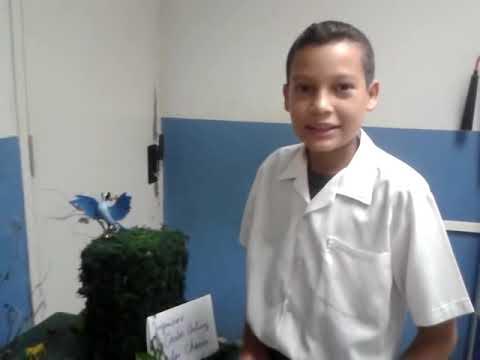 Maqueta los ecosistemas estudiantes VI A escuela Eneida M. de Castillero
