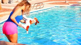 BOYFRIEND THROWS DOG IN POOL PRANK ON GIRLFRIEND!! (BOYFRIEND REVENGE PRANK)